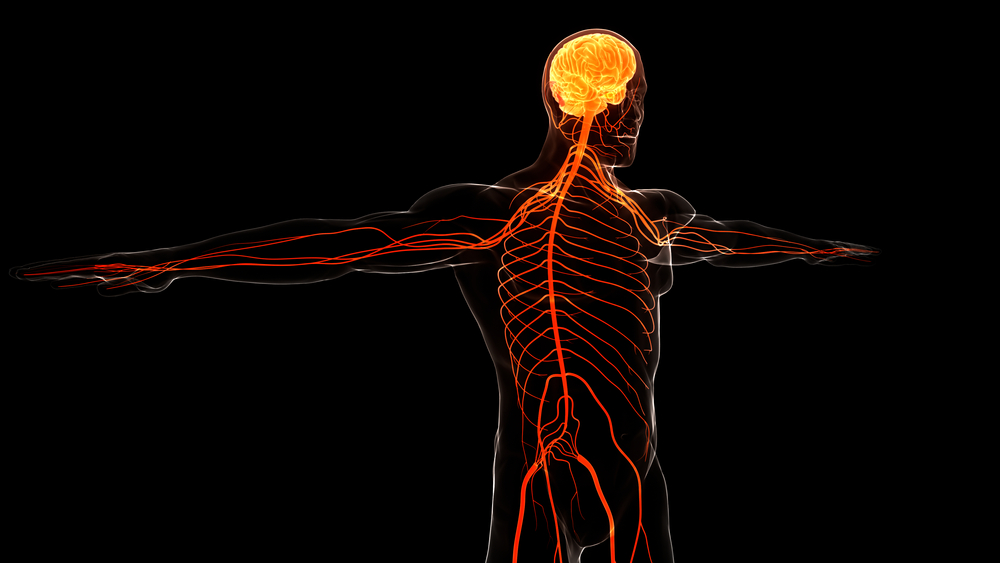 Brain and Spinal Injury Attorney